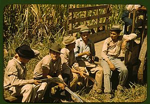 Sugar cane workers resting 1a34016v