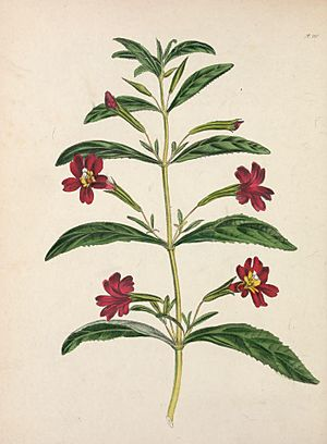 The floral cabinet and magazine of exotic botany (1840) (14592249977).jpg