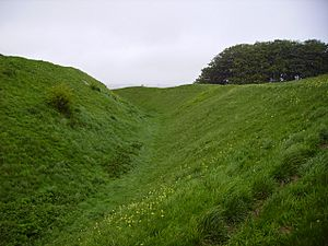 Barbury Castle Cowslips.JPG