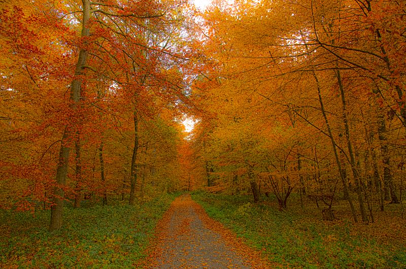 Autumnal deciduous forest - Laubwand im Herbst