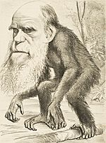 Editorial cartoon depicting Charles Darwin as an ape (1871)