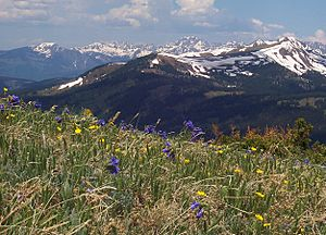 Alpine tundra Copper Mountain Colorado