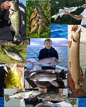 Game fish collage