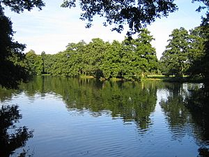 The Lake in Boultham Park - geograph.org.uk - 52578
