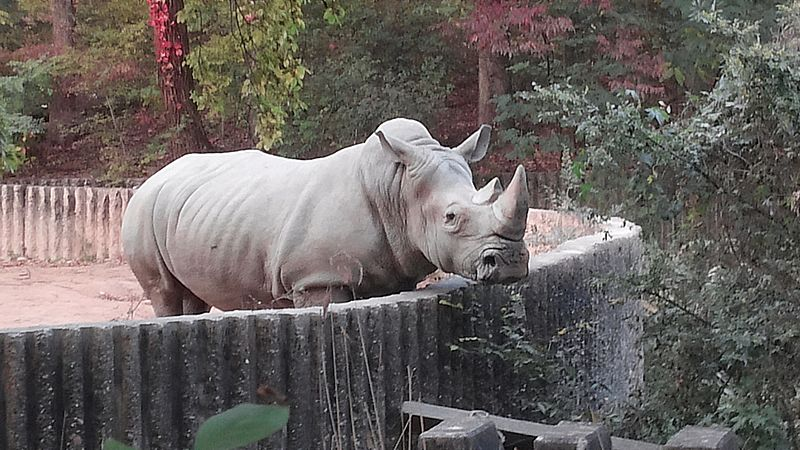 Whiterhinoceros Seoul