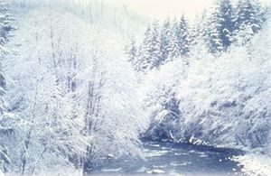 Snowy Salmon River