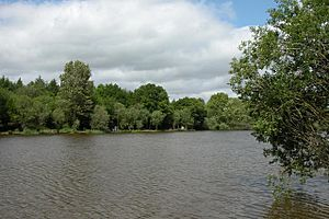 Lodge Pond, Alice Holt Forest - geograph.org.uk - 15121