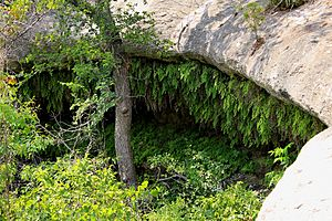 Meridian state park grotto.jpg