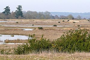 Crookham Common - geograph.org.uk - 1187560.jpg