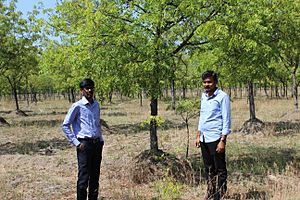 Neem tree farm in south india