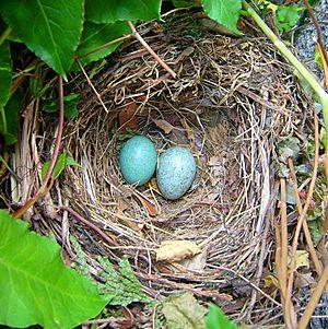 Bird Nest Facts For Kids
