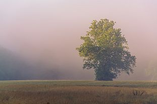 First State National Historic Park Misty Field by Greg Young