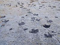 Dinosaur Ridge tracks