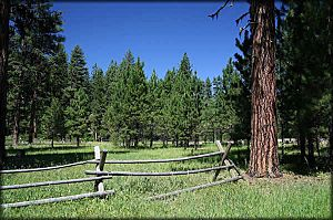 Deep Springs area, Ochoco National Forest, Oregon