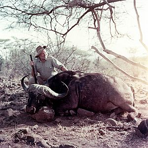 Ernest Hemingway poses with water buffalo, Africa, 1953