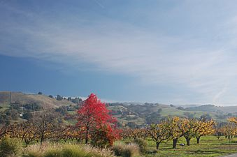 Orchards in Morgan Hill