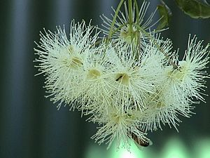 Lilli pilli flowers