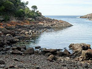 Bushrangers Bay - Bass Point.JPG