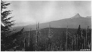 Picture from Timber Crater, looks north showing heavy fir and hemlock timber on TImber Crater. Diamond Lake and Mount... - NARA - 298913