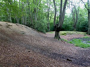 Northwestern ditch and bank at Loughton Camp