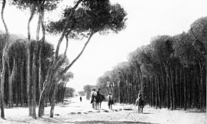 SL 1914 D052 among the pine groves of the cape of beirut