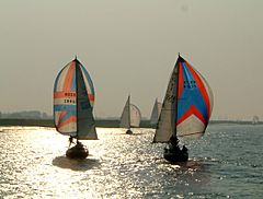 Spinnakers on the River Crouch.jpg