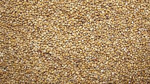 A closeup scene of country pearl millet