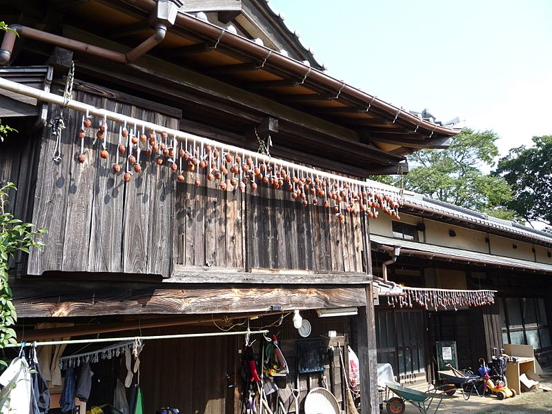 Japanese Persimmons drying