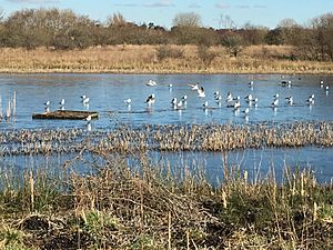 Greenhead Moss Community Nature Park - panoramio.jpg