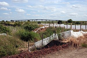 Occidental jetty and reed beds at Canvey Wick