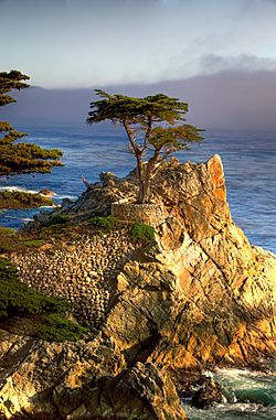 The Lone Cypress, a natural icon of the community, as seen by residents and more often tourists from 17-Mile Drive