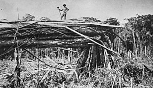 StateLibQld 1 117904 Clearing timber on a block at Mount Tamborine, 1912