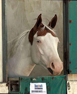 APHA Mare2