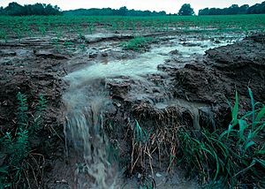Runoff of soil & fertilizer