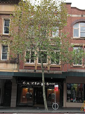 GA Zink and Sons Building, 56 Oxford Street Darlinghurst NSW 01.jpg