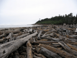 Driftwood Expanse, Northern Washington Coast