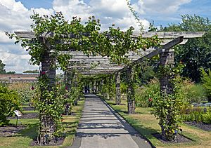 Rose Pergola at Kew Gardens