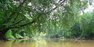 Neuse River-27527