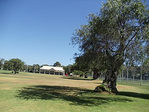 View of Manners Hill Park showing the pavilion and a tree in Peppermint Grove, Western Australia..JPG