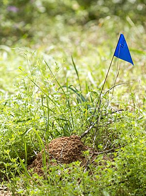 Fire ant mound (16371103174)