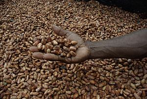 Medium close up image of David Kebu Jnr holding cocoa beans drying in the sun. (10703178735)