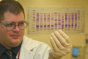 CBP chemist reads a DNA profile