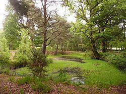 Ferndown, small pond on Ferndown Common - geograph.org.uk - 1352717.jpg