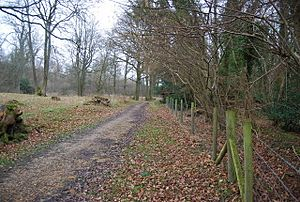 Footpath through Coombe Woods - geograph.org.uk - 1206481.jpg