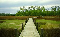 Palmetto Islands Park Boardwalk 2