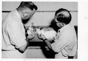 Queensland State Archives 4855 Myxomatosis experiment Sherwood c 1952