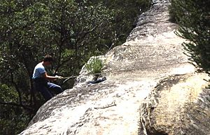 Abseiling in bush near Cliff Avenue, North Wahroonga, New South Wales, Sydney - Wiki0147