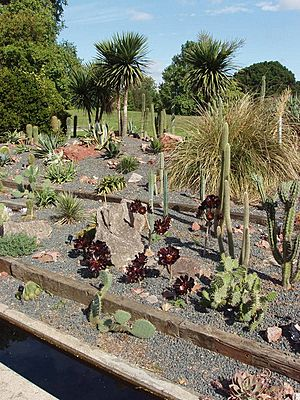 Cactus outside in Kew Gardens - geograph.org.uk - 226856