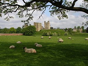 A beautiful English pastoral view - geograph.org.uk - 432515