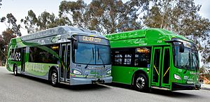 Culver CityBus Rapid and Local Buses